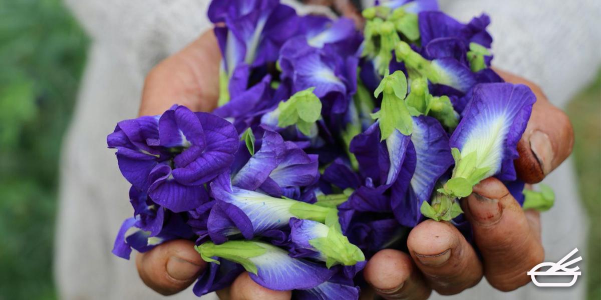 ดอกไม้กินได้ สวย และอร่อย