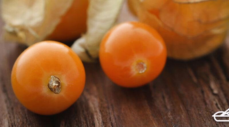 เคพกูสเบอร์รี่ผลไม้ต้านมะเร็ง หลอดเลือดหัวใจ