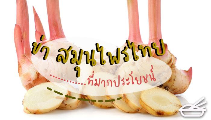 ข่า สมุนไพรไทยที่มากประโยชน์