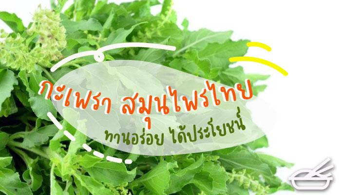 กะเพรา สมุนไพรไทย ทานอร่อย ได้ประโยชน์